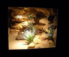 The Lifespan of a Bearded Dragon Depends on Proper Care - Exotic Bearded Dragons Reptile Habitat, Reptile Room, Reptile Cage, Reptile Enclosure, Aquascaping, Leopard Gecko Cage, Reptiles, Terraria Memes, Rock Background