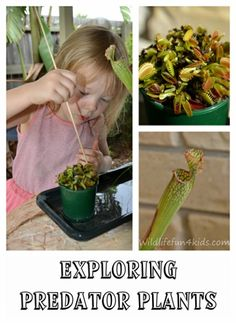 Predator plants for kids