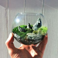 City Gardens In Chicago 2013 The world in the palm of your hands. Terrarium by bioatticThe world in the palm of your hands. Terrarium by bioatticGardening-Best City Gardens In Chicago 2013 The world in the palm of your hands. Terrarium by bioattic Terrarium Plants, Succulent Terrarium, Succulents Garden, Planting Flowers, Succulent Plants, Terrarium Closed, Terrarium Wedding, Succulent Ideas, Cactus Plants