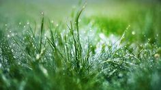 1920x1080 widescreen backgrounds grass