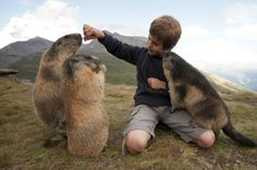 Austrian Boy  And Marmots http://avaxnews.net/wow/Austrian_Boy_And_Marmots.html #avaxnews.net #animals #children