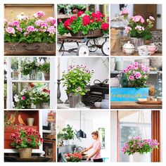 Pelargonium breeders Dümmen Orange, Elsner PAC, Florensis/van der Haak, Geranien Endisch and Selecta One have started a joint marketing campaign named Pelargonium for Europe. With this initiative, …