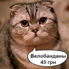 Хорошие скидки на бесшовные шарфы. Cats, Animals, Gatos, Animaux, Animales, Cat, Kitty, Animal, Dieren