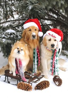 Christmas doggies!