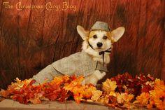 Autumnal Sherlock Corgi~AH~ Yahoo!!!! I get my wish! A corgi in a deerstalker!