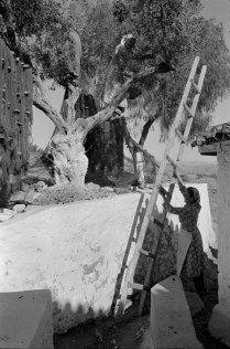 Grecia 1953 #Fotografía Henri Cartier-Bresson @Qomomolo