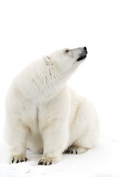 brazenbvll:  In The White: (©)