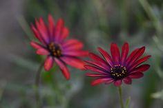 flower by Sultann on 500px