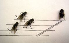 dead flies!!! http://accidentalmommies.com/fun-with-dead-flies/ check it out!