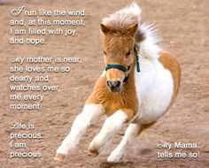 Very Cute Baby Horses | Edwin is a little baby miniature horse. He is a little ball of dynamite