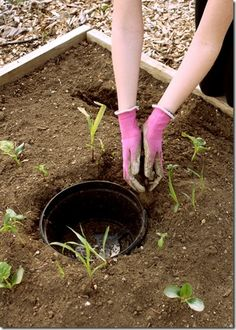 Gardening in Small Spaces -- Planting a Three Sisters Garden