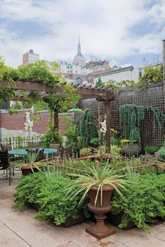 Look Up! The Coolest Rooftop Gardens In NYC.