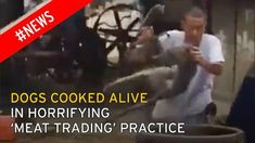 Horrifying footage shows Chinese villagers tossing greyhound in a vat of boiling water