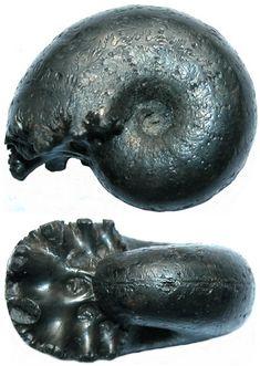 DESMOCERAS latidorsatum - jsdammonites