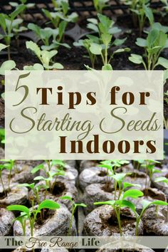 Starting seeds indoors can be tricky. Here are 5 tips to get the best results when starting your seeds indoors.