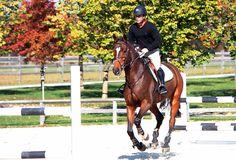 Pure Horse Sense   Shortening and Lengthening