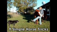 Here is a quick video that Trigger, Bella and Daisy dog made to show you 9 simple tricks you could teach your horse. Have fun! :)