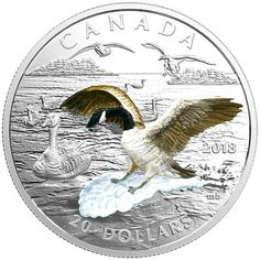 Pure Silver Coin - Approaching Canada Goose (Low Certificate of Authenticity) - Mintage: Canadian Coins, Coin Art, Silver Coins, Mint Coins, Rare Coins, Coin Collecting, Canada Goose, Walmart, Pure Products