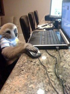 On the internet no one knows youre a monkey No one #funny #internet #youre #monkey #humor #comedy #lol