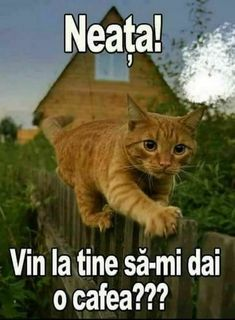Love You Gif, Phonetic Alphabet, Good Morning Good Night, Emoticon, Facebook, Animals And Pets, Cute Cats, Funny Memes, Kitty