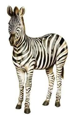 """Zebra - 52""""H x 31""""W - Peel and Stick Wall Decal by Wallmonkeys by Wallmonkeys Wall Decals, http://www.amazon.com/dp/B00CSV91OU/ref=cm_sw_r_pi_dp_dfUqsb0DB7P8B"""