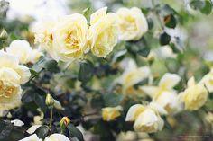 spring notes by Sonya Khegay 23