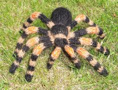 My Pet Tarantula Toy Spider  knitting pattern - Had a REAL one.  Oh - if you live in an area with scorpions - catch some tarantulas and turn them loose - no more scorpions.