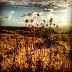 Umbrian country, more than a dream! #Umbria