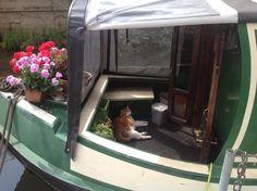 cat on a narrowboat Narrowboat Interiors, Narrow Boat, Van Home, Pinterest Garden, Best Family Vacations, Love Boat, Canal Boat, Marine Boat, Floating House