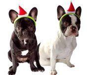 MERRY CHRISTMAS....ferdinand and arturo <3