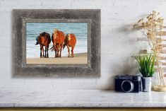 Great collection of North Carolina's wild horses canvas & photography prints taken with environmental awarness and hand-picked with love. Choose the best format for your interior design and enjoy free ground shipping within the United States! #johnsamsphotography #photography #travelphotography #wildlifephotography #wildhorses #horses #canvas #wallart #canvasprint #homedesign #interiordesign #fineartamerica Photography Career, Horse Photography, Wildlife Photography, Travel Photography, Canvas Online, Us Marine Corps, Sams, Wild Horses, Beautiful Bride