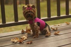 Small dog harness tutorial and lots of other great dog accessories to make