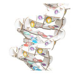 Cardboard Safari - DNA Helix, $40.00 (http://www.cardboardsafari.com/dna-helix/)