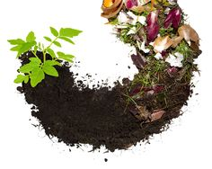 The Composting Circle of Life