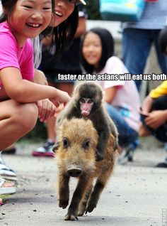 Funny Baby Animals: A baby monkey riding a baby pig! Cute, or what? Tiny Pigs, Tiny Monkey, Monkey Baby, Baby Pig, Baby Animals, Funny Animals, Cute Animals, Wild Animals, Funny Pictures With Captions