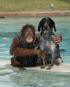 Finally, just remember that somewhere, an orangutan just became BFF with a dog... | The 30 Happiest Facts Of AllTime