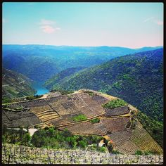 Viñedos de la #RibeiraSacra  Ribeira Sacrás #wineyards Photo by equipaxedeman