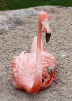 Flamingo 7 Pinterest Boards for Color Inspiration | Anthony Lawrence : Blog