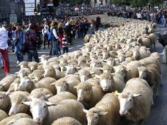 El Blog de la Loles Independiente 2: Se celebra en Madrid como cada año la Fiesta de la...