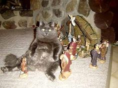 There was a cat, in the manger with baby Jesus