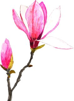 one pink magnolia