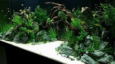 450 L Tank . Aquascape 2015 by Silverlihgt (germany) . Pin by Aqua Poolkoh