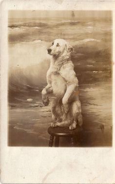 """Vintage dog portrait """"Staaaayyyy….Staaayyy!"""")"""