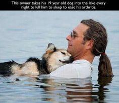 Herrchen nimmt seinen 19 Jahre alten Hund jeden Abend mit ins Wasser um dessen Arthrose zu lindern.