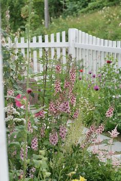Foxgloves, Hollyhocks, Daisies, and Catnip. Flowers Perennials, Planting Flowers, Small Gardens, Outdoor Gardens, White Picket Fence, Picket Fences, Garden Gates And Fencing, Rose Garden Design, Rose Cottage