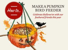 Don't ditch the Halloween pumpkin just yet... Give it a new lease of life in the garden as a pumpkin bird feeder. Pumpkins spend all summer ballooning into huge, majestic,super-squash, then come autumn, most are either made into soup or carved into a lantern at Hallowe'en. These heavyweights