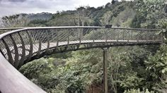 Another amazing weekend outing - cant wait for summer! a nice picnic and walk at kirstenbosch - the new canopy walk. Tree Canopy, Great View, Cape Town, Cant Wait, Picnic, Places To Visit, Gardens, African, Explore
