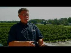 Mitchell's grow the wines you love in Harrow, Ontario