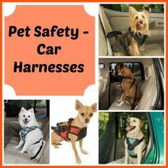 Pet Safety – Car Harness Awareness