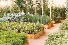 Mittleiderova metóda úzkych záhonov pre pestovanie zeleniny 3/3 - OZ Biosféra Plants, Design, Garden Ideas, Gardening, Lawn And Garden, Flora, Design Comics, Plant